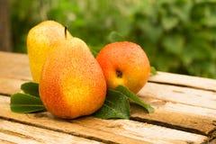 selektivt för nya naturliga pears för bakgrundsfokus moget dof Royaltyfria Bilder