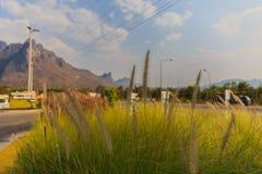 Selektivt fokusera av en gräsblomma Royaltyfri Fotografi
