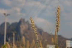 Selektivt fokusera av en gräsblomma Arkivfoton