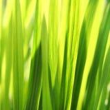 selektivt slappt soligt för bakgrundsfokusgräs Arkivfoto
