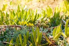 Selektivt utomhus- under-naturligt solljus för härliga mjuka mycket små små blommor för växt lite gulliga gula tropiska exotiska arkivfoto