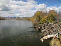 Selenge river, Mongolia Stock Image