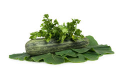 selerowy szpik kostny badyla vegetagle Obrazy Royalty Free