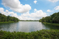 上部Seletar水库在新加坡 免版税库存照片
