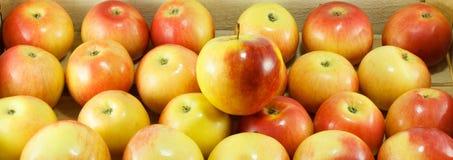 Selezionamento della mela giusta Fotografia Stock Libera da Diritti