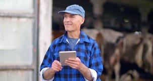 Selezionatore della mucca che verifica il bestiame e che per mezzo della compressa digitale stock footage