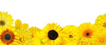 Selezione dei fiori della riga gialla in basso isolata Immagine Stock Libera da Diritti