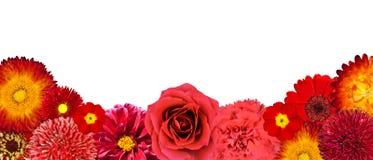 Selezione dei fiori della riga rossa in basso Fotografie Stock Libere da Diritti