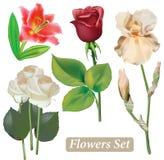 Selezione dei fiori isolata su fondo bianco Fotografie Stock