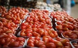 Selezione dei pomodori ciliegia Immagine Stock