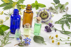 Selezione del fiore e della pianta medicinale, menta piperita, passiflora, salvia, timo, melissa della lavanda con un'aromaterapi Immagini Stock Libere da Diritti