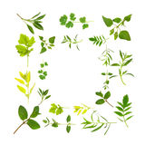 Selezione del foglio dell'erba royalty illustrazione gratis