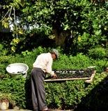 Selezione dell'uva Immagine Stock