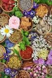 Selezione della medicina di erbe Immagine Stock Libera da Diritti