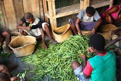 Selezione della vaniglia dal Madagascar Fotografie Stock