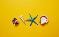 Selezione delle conchiglie e delle stelle marine Fotografie Stock Libere da Diritti