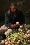 Selezione delle rape nel mercato Skoura morocco Fotografie Stock