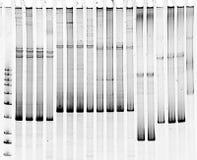 Selezione di mutazione Fotografia Stock
