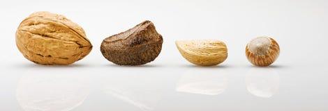 Selezione di vari dadi: mandorle, noce del Brasile, noci, hazelnu Fotografia Stock