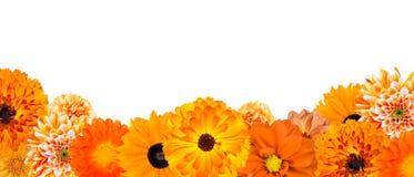 Selezione di varia dei fiori riga arancione in basso Immagine Stock