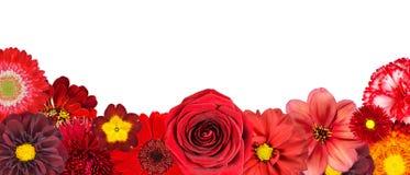 Selezione di varia dei fiori riga rossa in basso Fotografia Stock