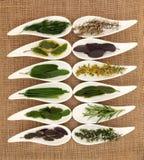 Selezione fresca dell'erba Fotografie Stock