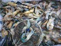 Selezione nel mercato, vetrina del gamberetto di frutti di mare freschi in Fotografie Stock Libere da Diritti