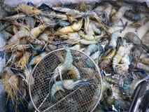 Selezione nel mercato, vetrina del gamberetto di frutti di mare freschi in Fotografia Stock Libera da Diritti