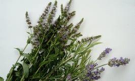 Self-healing geneeskrachtige en aromatische kruiden stock afbeelding