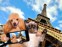 Self-portrait dog and cat Royalty Free Stock Photo