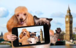 Self-portrait dog and cat Stock Images