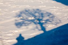 Self-portrait of the photographer. Shadows of a tree and the photographer on a snow surface Stock Photography