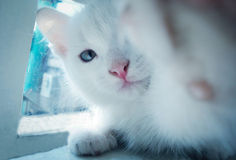 Selfi-Katze stockfoto