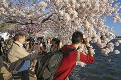 Selfie和摄影在樱花 图库摄影