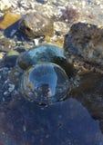 Selfie пузыря Стоковая Фотография