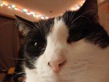 Selfie photo stock