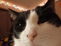 Selfie Stock Foto