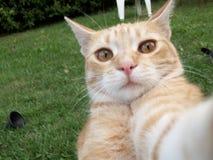 猫selfie 免版税图库摄影