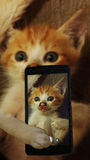SELFIE CAT Stock Images