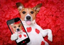 Selfie color de rosa de las tarjetas del día de San Valentín del amor del perro imágenes de archivo libres de regalías