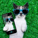 Selfie de chien image libre de droits