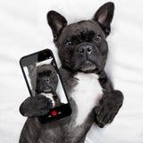Selfie de chien dans le lit Photos libres de droits