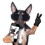 Selfie de CHIEN de bull-terrier Photo stock