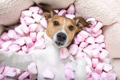 Selfie de valentines d'amour de chien Photographie stock