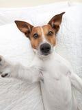 Selfie del cane fotografia stock