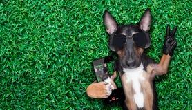 Selfie del cane Immagini Stock Libere da Diritti