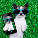 Selfie del cane Immagine Stock Libera da Diritti