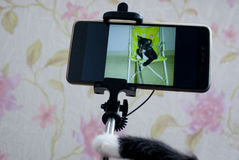 Selfie del gatto La prospettiva di un animale domestico Fotografia Stock