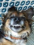 Selfie del perrito Imagen de archivo
