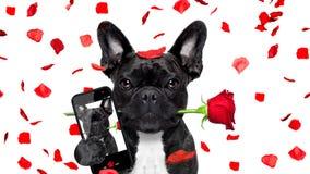 Selfie del perro de las tarjetas del día de San Valentín en amor fotografía de archivo libre de regalías